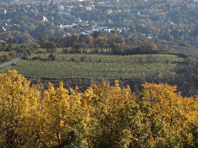 Blick vom Kahlenberg