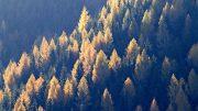 Waldimpressionen. Alle Fotos: K. Holzer