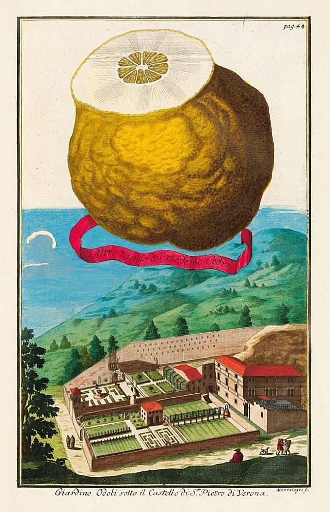 Frucht: Cedro a Zucheta / Vedute: Verona, Odoli-Garten. Alle Abbildungen in diesem Beitrag: © Stadtarchiv Fürth