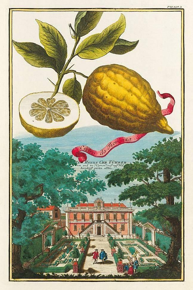 Frucht: Cedro da Fiorenza / Vedute: Schwabach, Wolkersdorf – Der Garten von Christoph Fürer von Haimendorf