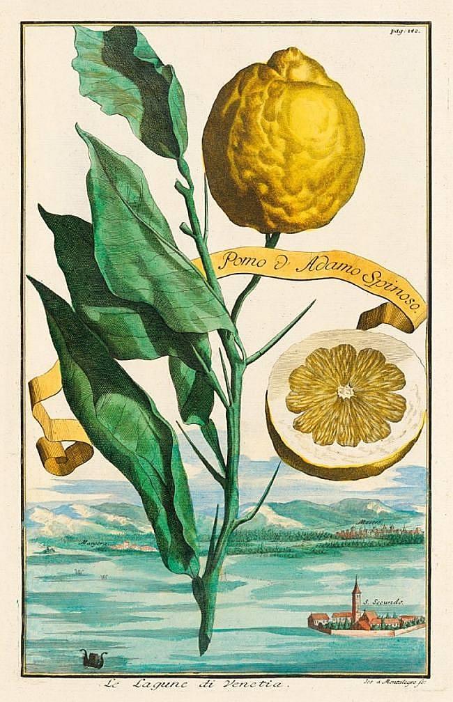 Frucht: Pomo d'Adamo Spinoso / Vedute: Venedig – Die Lagune