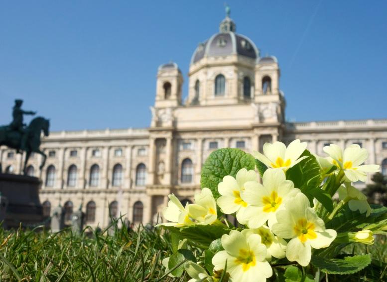 """Aus dem Buch """"Wildes Wien"""": Primeln vor dem Naturhistorischen Museum"""