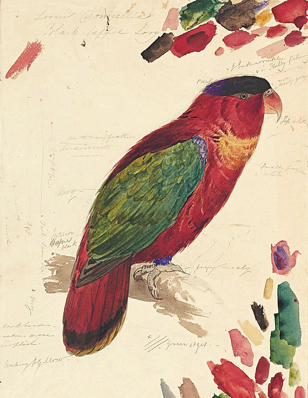 """Papagei, Illustration im Band """"Die Farben der Natur"""". Abb. © The Trustees of The Natural History Museum, London"""