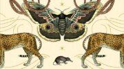 "Ausschnitt aus dem Cover des Buches ""Sentient. What animals reveal about our senses"" von Jackie Higgins"